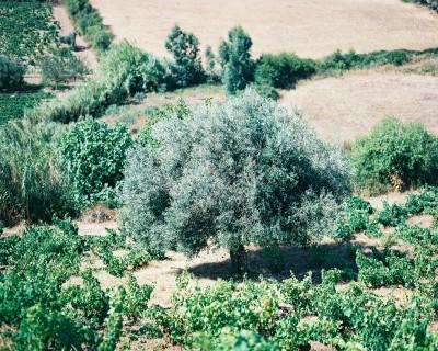 Sardaigne